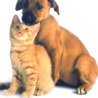 Work at Home Pet Sitting Business