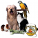 Is It Time to Consider a Pet Related Business